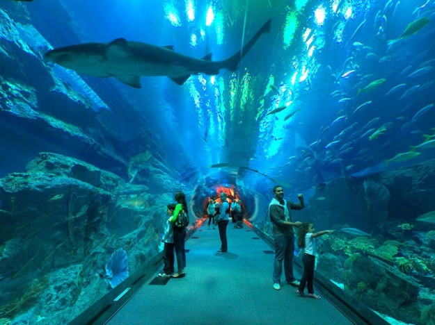 Odysea In The Desert Aquarium Soon To Rise In Arizona
